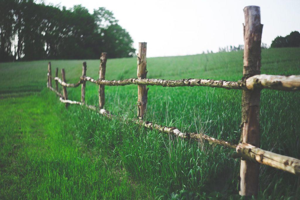 Constat plantations limite de propriété